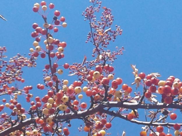 Berry fall